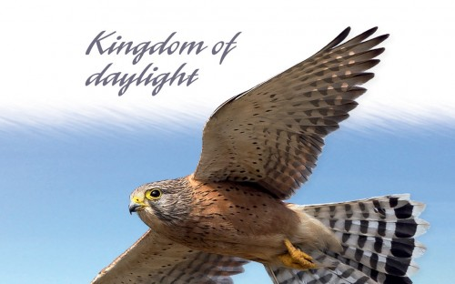 story image for Peter Steyn (1955O): Kingdom of Daylight: Memories of a Birdwatcher