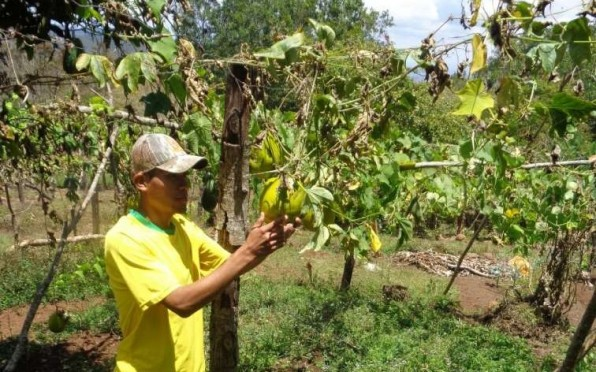 Small-farmer participant.