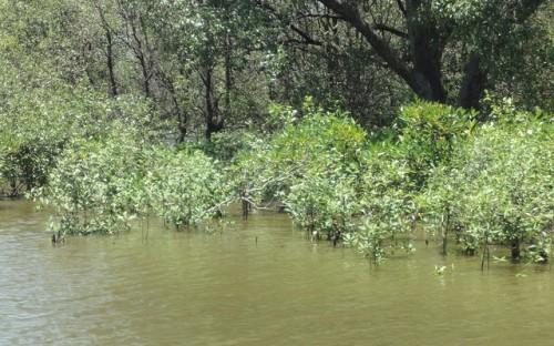 PIFWA Mangrove Planting, By Marufish, CC BY-SA 2.0