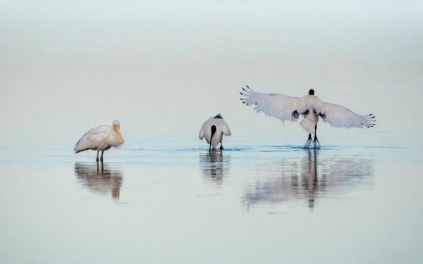 Taking Flight - Peel Inlet Western Australia