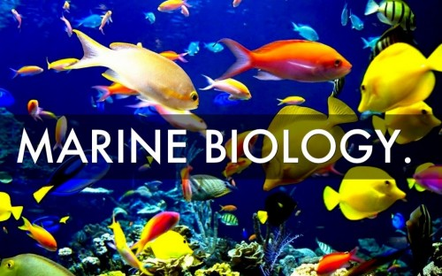 story image for Any marine biologists?