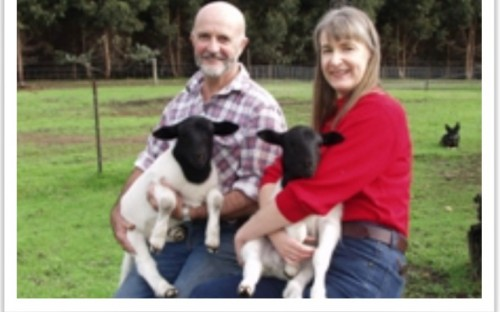 Collin and Susan at home with their sheep